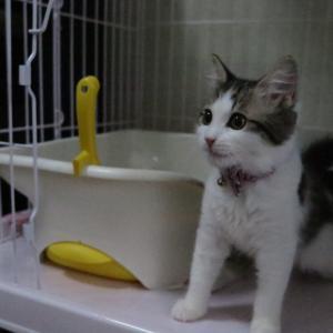 本日の猫: 猫の日なので昔の猫の姿を