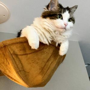 本日の猫: 飛び出す猫