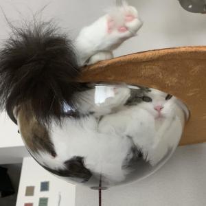本日の猫: 液体の猫