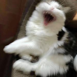 本日の猫: 口から凍てつく波動的なものを出す猫