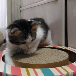 (妻)猫記録:結石が見つかるまで①