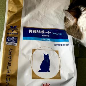 (妻)猫記録:猫の日用品について③