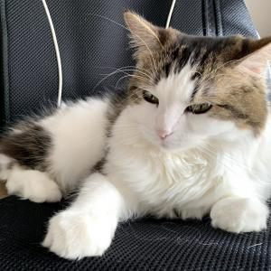 (妻)猫記録:退院後③(今年の振り返り)