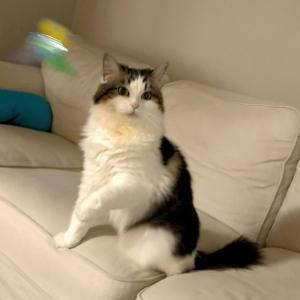 (妻)猫記録:自宅での皮下輸液へ⑦(自宅での皮下輸液に初挑戦!)