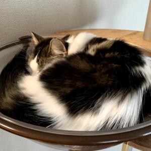 (妻)猫記録:自宅での皮下輸液へ⑨(自宅での皮下輸液を始めて、約1か月が経ちました)
