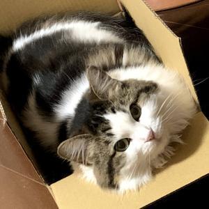 (妻)猫記録:自宅での皮下輸液へ⑩(血液検査の結果)