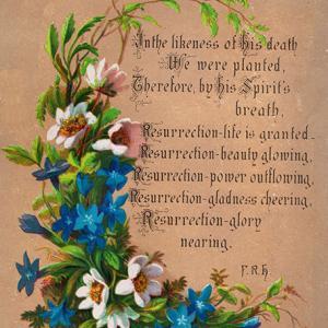【フリー素材】美しいお花のポストカード【アンティーク・ビンテージ】