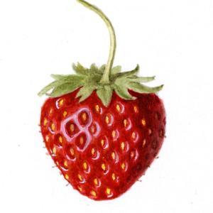 【フリー素材・商用可】かわいいイチゴのイラスト【アンティーク・ビンテージ・パブリックドメイン】