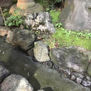 大國魂神社で夏越の大祓