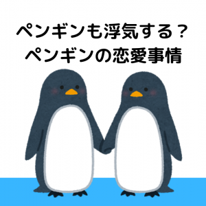 ペンギンも浮気する?ペンギンの恋愛事情