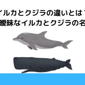 イルカとクジラの違いとは?意外と曖昧なイルカとクジラの名付け方