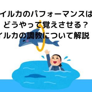 イルカのパフォーマンスはどうやって覚えさせる?イルカの調教について解説!