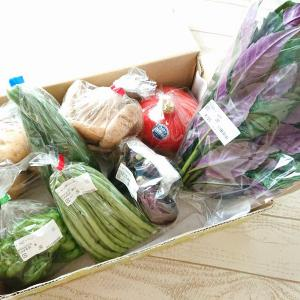 JA金沢市 ほがらか村より金沢 加賀野菜(含む)セットを購入…♪