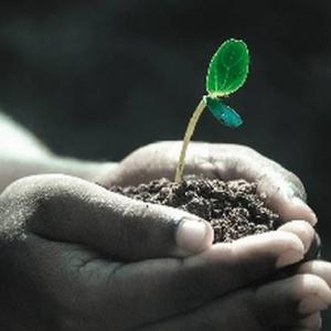 家庭菜園で土の酸度調整をしないと失敗する?簡単な方法はあるの?