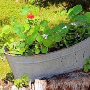家庭菜園でのプランター選びのポイント!深さは浅くても大丈夫?