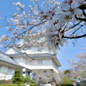 【Online Cherry Blossoms Viewing_Ranking】If you can't do it outside, you can go online.