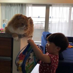 猫にお願いする弟。