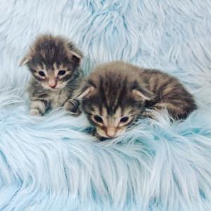 がぶちゃんの子猫たち目があきました!