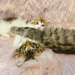 ひなちゃんの子猫たちももうすっかり、、、大きくなってきてます。
