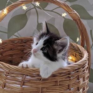 グランちゃんの子猫たちも生後1か月。。。どころじゃなかった、、40日!