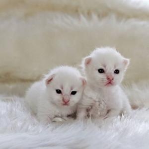 ぷっぱちゃんの子猫たち目が明きました。 ネヴァマスカレード