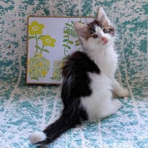グランちゃんの子猫も2か月になりました!