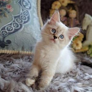 ぷっぱちゃんの子猫たち お引越しがはじまります。。。