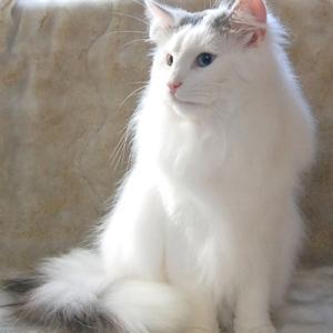10月30日にあきちゃんが出産しました。