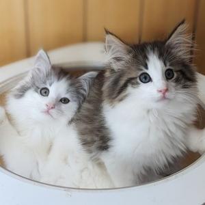 あきちゃんの子猫たちは新しいお家がきまりました。