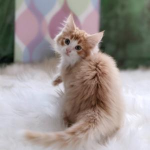 みーちゃんの子猫が生まれました。 ノルウェージャン