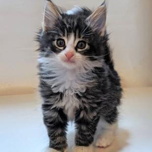 らぶちゃんの子猫たちはこんなに大きくなりました。らぶちゃn