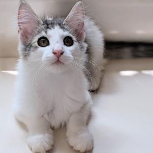 番外編 みーちゃんの子猫たち オーナーさん募集中。  あと1匹お家を募集です。