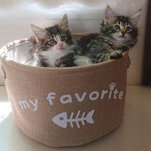 ラブちゃんの子猫たち生後2か月になりました!