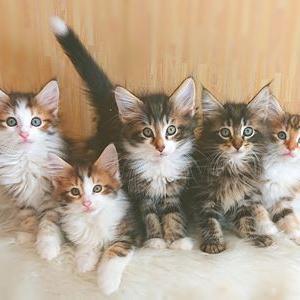 プラムちゃんの子猫たち全員集合!