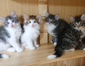 ひなちゃんの子猫たちも勢ぞろい!