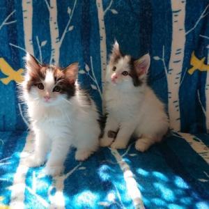 アクアマリンの子猫たち ふわふわです。
