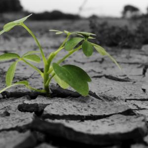 地球温暖化で自殺や鬱病が増加、環境に優しく自分達に優しい世界へ