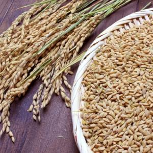 お米の表面には菌が一杯?どのくらいの菌がいるの?