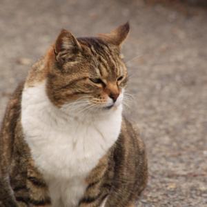 根岸の猫にゃんやんにゃん