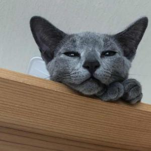 最高級キャットタワーおすすめ20選 セレブや猫カフェ経営者向け?