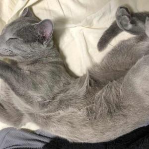 毛づくろいからの超熟睡 ベッドシーツを変えたから?