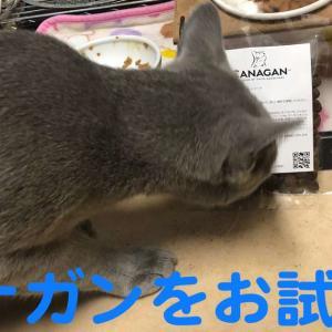 カナガンキャットフードのお試しセットをレビュー【実食動画あり】