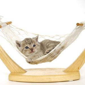 K&Hの猫窓ハンモックをレビュー|吸盤は落ちる?口コミは?