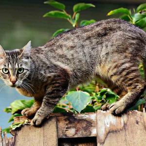 またたびに蚊よけ効果?猫がすりすりする理由が明らかに