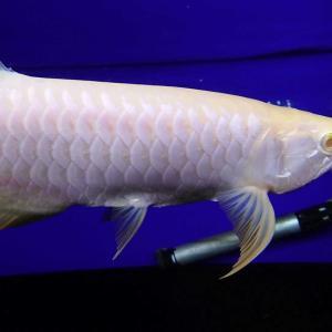 現在のストック魚とテンニングに関して☝️