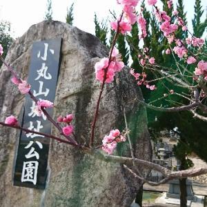小丸山城址公園。