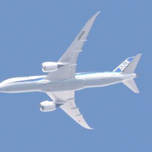 大空に飛行機を見上げて1