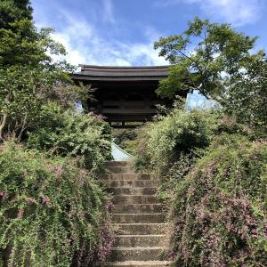 【鎌倉いいね】朝撮れ海蔵寺。清楚な萩の花が美しい。
