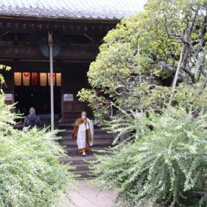 【鎌倉いいね】今見るべきの萩寺の萩の花(宝戒寺)