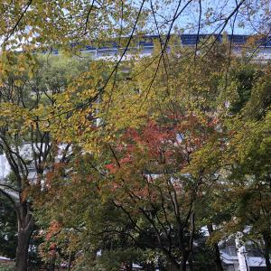 【アラ還さんぽ】ちょっと寄り道。横浜の紅葉は?